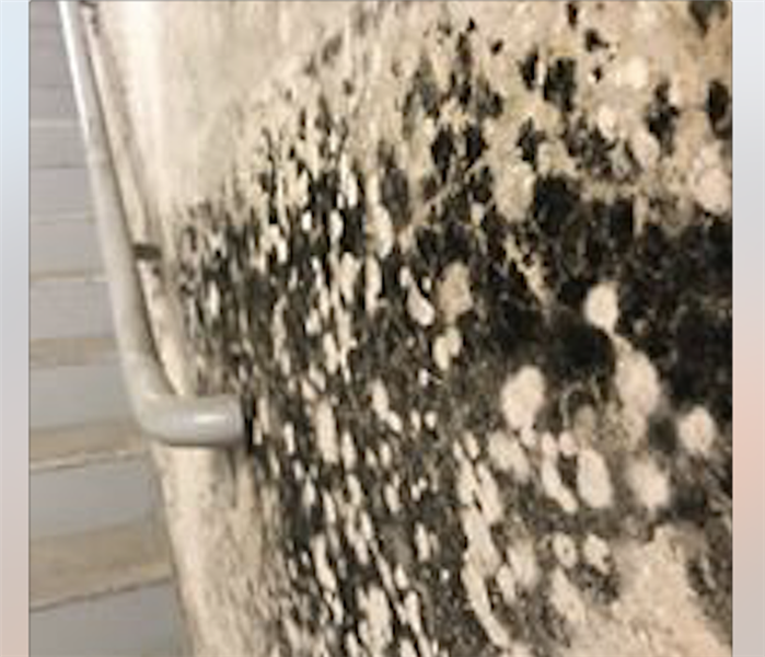 Severe mold growth on wall.