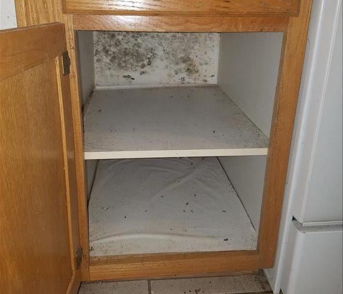 mold under a cabinet