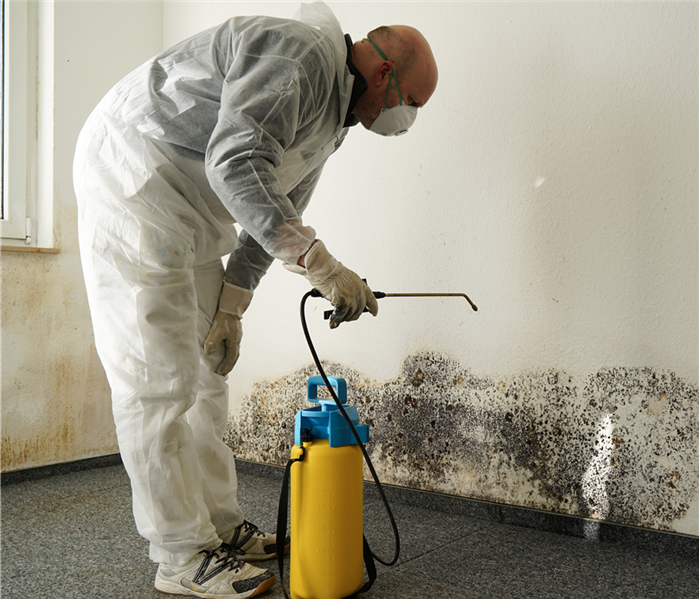 Mold Remediation Safety Gear to Wear for Renovation Projects