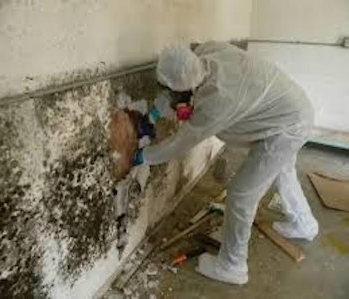 Mold Remediation Mold Eradication and Remediation