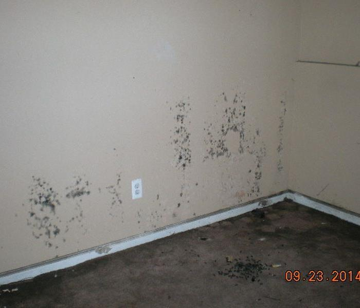 Mold Remediation Does Your Redlands/ Yucaipa  Home Have A Mold Problem?