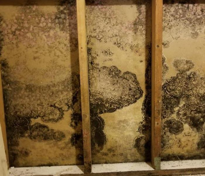 Mold Remediation 3 Signs There Could Be Mold in Your Ventilation System